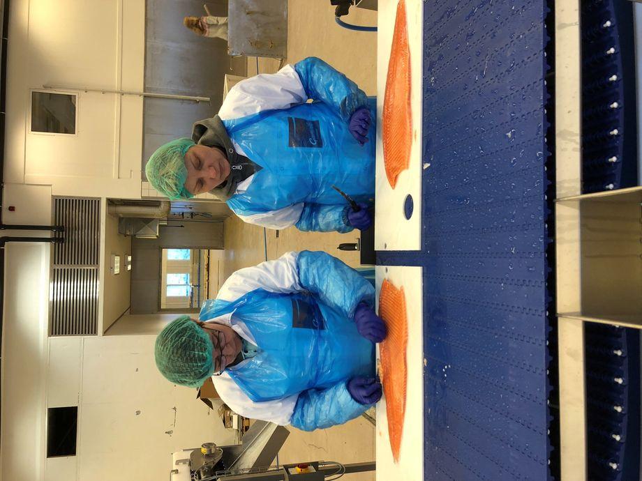 Ansatte under opplæring før produksjonsstart på fabrikken i Mehamn. foto: Norwegian Fish Company.