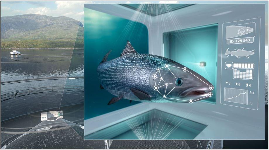 Illustrasjon av konseptet iFarm, hvor målet er individbasert oppdrett av laks i sjø. Kilde: Cermaq.