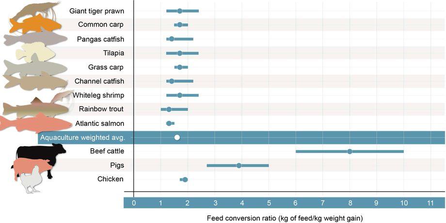 Feed conversion ratio for utvalgte landdyr og akvatiske oppdrettsarter. Prikkene representerer gjennomsnitt og linjene spennvidde. Jo lavere verdier jo høyere effektivitet . Kilder: Tacon and Metian (2008) [12], Smil (2013) [13], Shike (2013) [14], Zuidhof et al (2014) [15], and Rabobank Research (2015) [16].