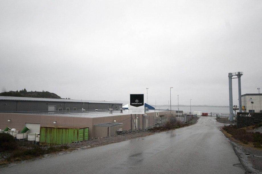 <p>Anlegget (t.v) er sentralt plassert i Øygarden, med gasskraftverket til BKK (t.h.) som nærmeste nabo. Her hentes verdifullt varmtvann til produksjonen. I karene er temperaturen normalt ca 14 grader.</p>