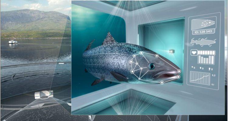 Ilustración del concepto iFarm, donde el objetivo es el cultivo de salmón en el mar a nivel individual. Fuente: Cermaq.