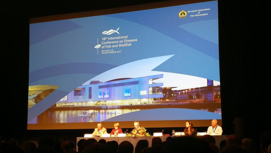 18th International Conference on Diseases of Fish and Shellfish. foto: IFOP.