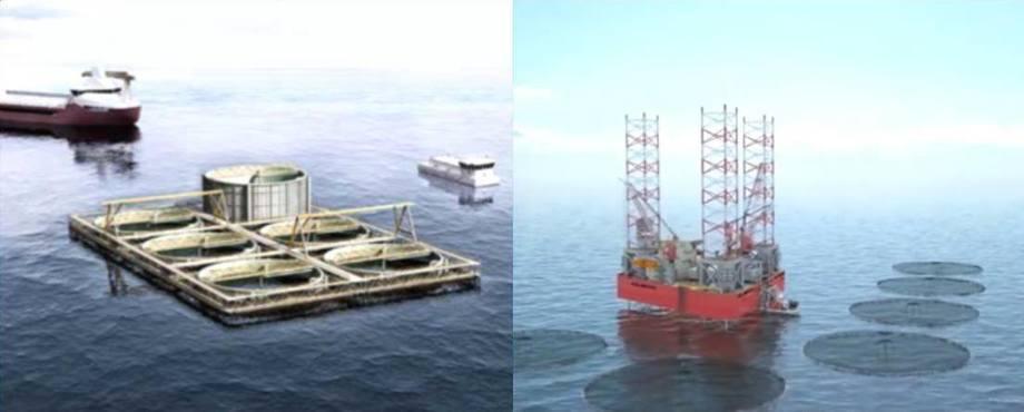 Proyectos de cultivo offshore en lo que se encuentra participando Skretting. Seafarming Systems (izquierda) y Roxel Aqua AS derecha). Foto: Skretting.