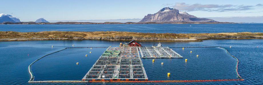 Gildeskål Forskningsstasjon (GIFAS) er en privateid havbruksstasjon med base i Gildeskål i Nordland. Foto: GIFAS.
