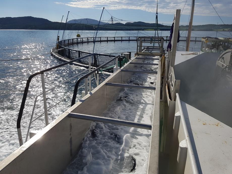 <p>Hydrolicer har også siden oppstarten kjørt et forskningsprosjekt sammen med Sintef, hvor de har hatt sensorfisk gjennom systemet, for å kontrollere trykkbelastning, fart m.m. Foto: Hydrolicer.</p>