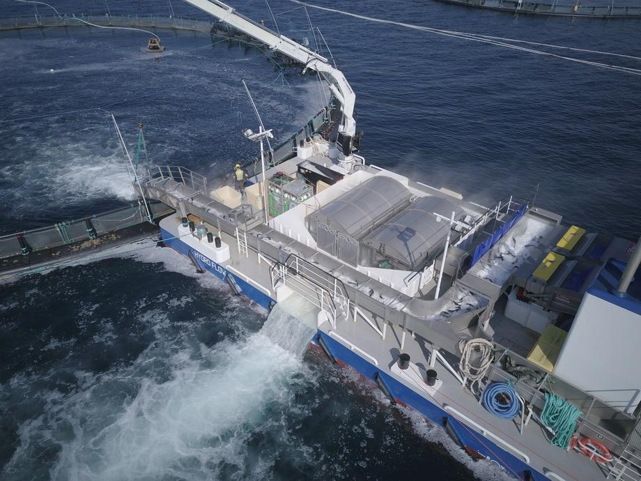<p>Fartsområdet til de to lekterne til Hydrolicer er i all hovedsak fra Leka i nord tilRoan i sør, og i juli har lekterne tilbakelagt cirka 220 nautiske mil tilsammen.Foto: Hydrolicer.</p>