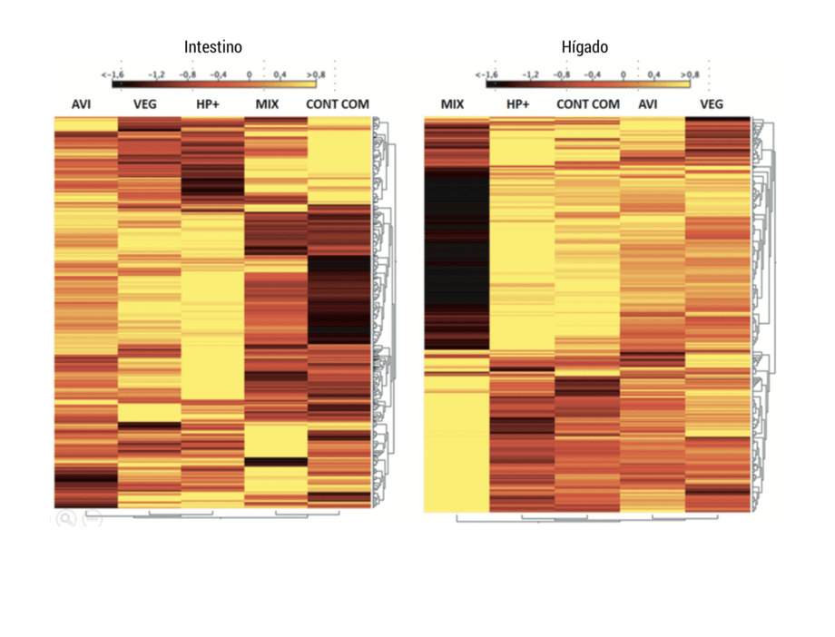 <div> <p>Heat map de intestino e h&iacute;gado de peces alimentados con las dietas experimentales durante el Experimento 1.</p> </div>