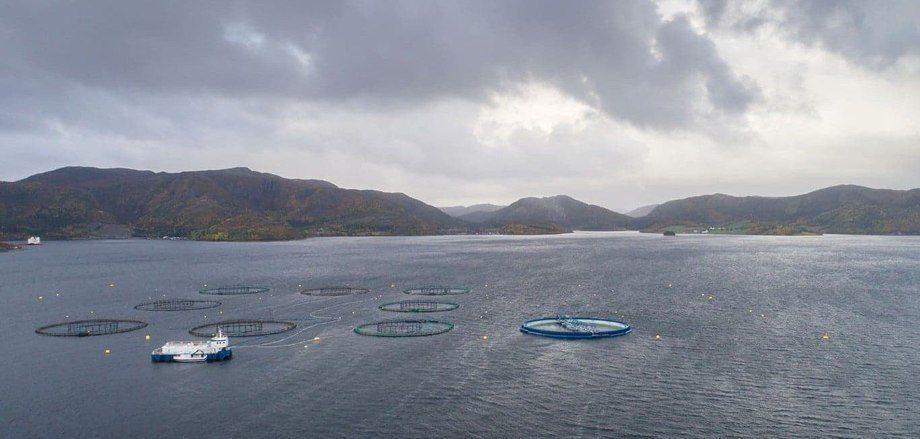 Utviklingskonseptet «Aquatraz» er nå på plass på Midt-Norsk Havbruk sin lokalitet, og fisk er nå på plass i den gigantiske nedsenkbare merden. Foto: Midt-Norsk Havbruk/Steinar Johansen.