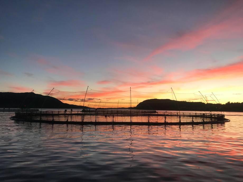 <p>Solnedgang fra merdkanten</p>