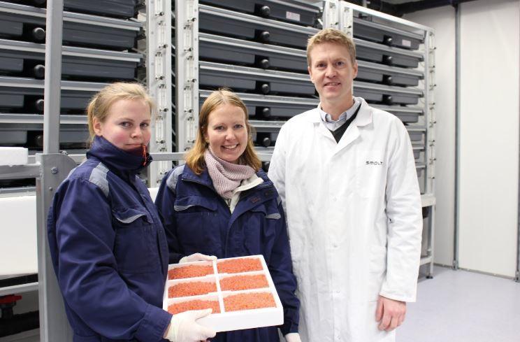 Eirik Welde sammen med Trine Grimstad (t.v) og Linda Lund (midten) i Nordlaks Smolt viser frem det første brettet med rogn. Foto: Nordlaks.