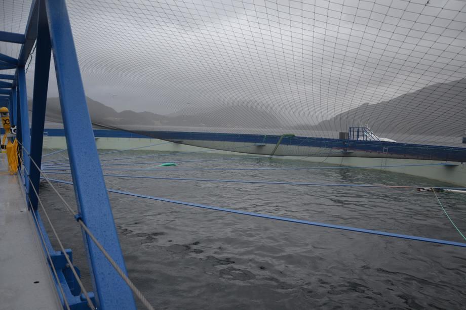 <p>Man har god oversikt over fisken fra gangbroen. Foto: Ole Andreas Drønen</p>