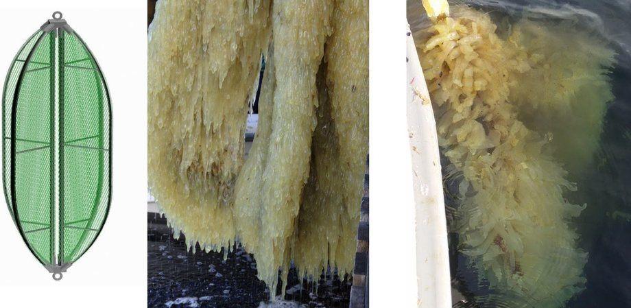 Her kan man se sekkedyr samlet på dyrkningsenheten til AkvaTotal. Foto: AkvaTotal.