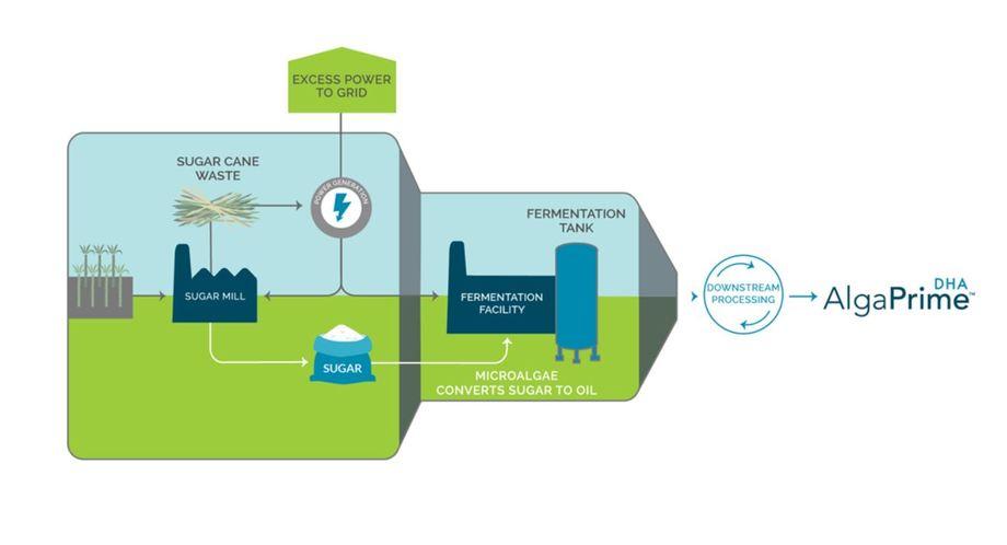 The AlgaPrime production process.