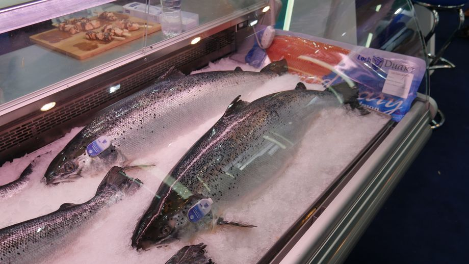Two 10kg salmon took pride of place in Loch Duart's chiller cabinet. Photo: FFE.