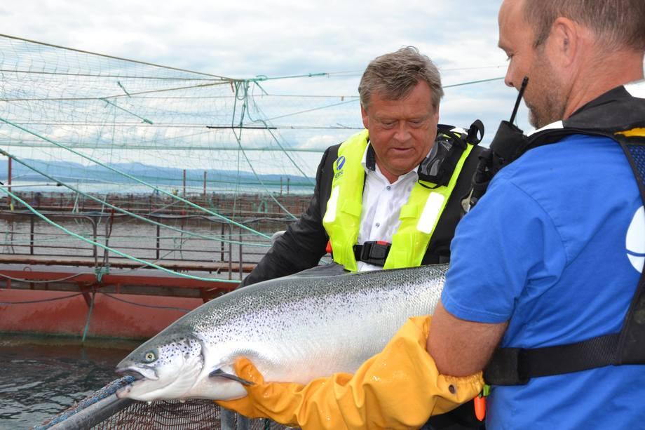 <p>Nesvik var imponert over kvaliteten og god påvekst på laksen hos Eide Fjordbruk.</p>