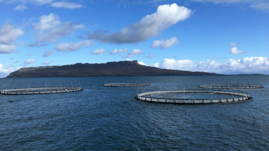 Mowi sees high-energy sites, such as this one at Muck, as most suitable for modern salmon farming and expansion. Photo: Mowi Scotland.