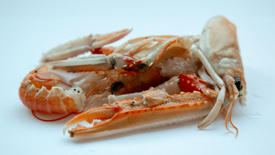CuanTec extracts antimicrobial chitin from langoustine shells and uses it in a compostable packaging. Photo: CuanTec.