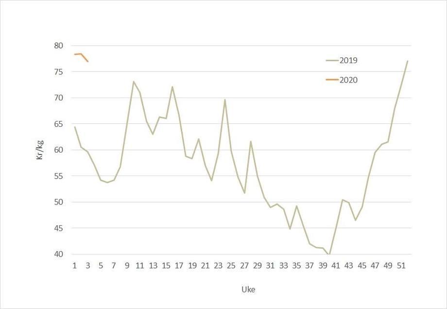 Spotprisen på laks i 2020 (oransje) mot 2019 (grå). Datakilde: Akvafakta.