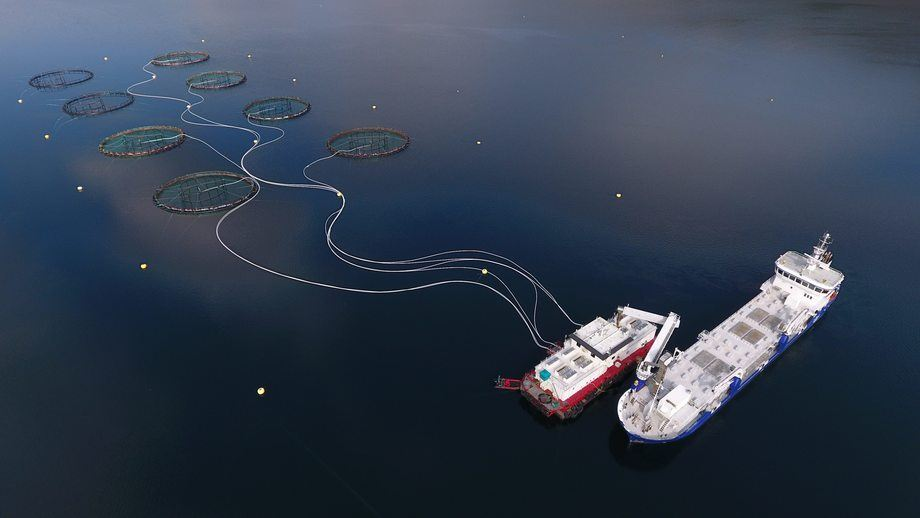 Mortenlaks har to tillatelser og produserer mellom 2300 - 2500 tonn laks i året. Foto: Mortenlaks