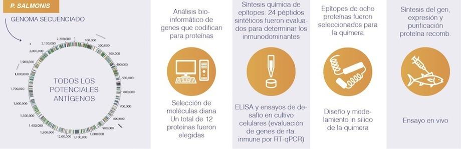 Etapadas de desarrollo de la vacuna. Imagen: Fundación Copec-UC