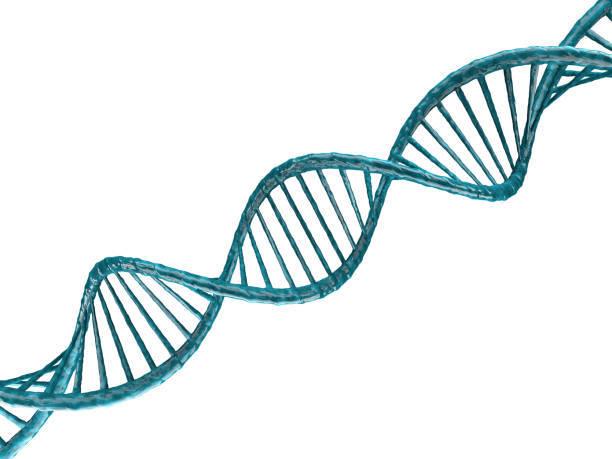 Målet i avlsarbeidet vårt er å øke frekvensen av enkelte viktige genotyper i populasjonen. Ikke minst gjelder dette de som fører til økt sykdomsresistens og kvalitetsegenskaper.