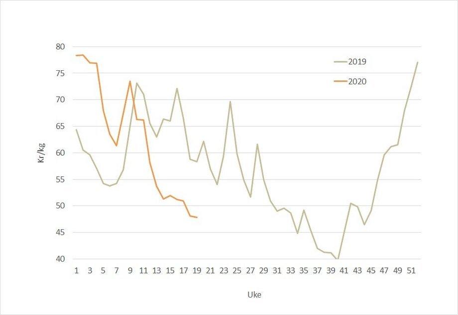 Spotprisen på laks i 2020 (oransje) og 2019 (grå). Datakilde: Akvafakta.