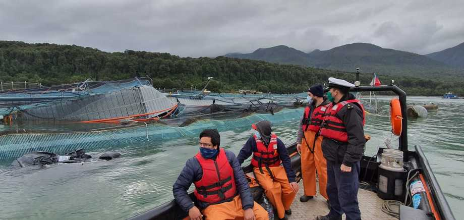 Officials from Sernapesca and the Navy joined inspect the cages. Photo: Directemar.