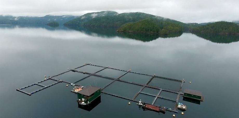 The Gindara Sablefish site  in Kyuquot Sound on the north west coast of Vancouver Island. Image taken from Gindara Sablefish video.