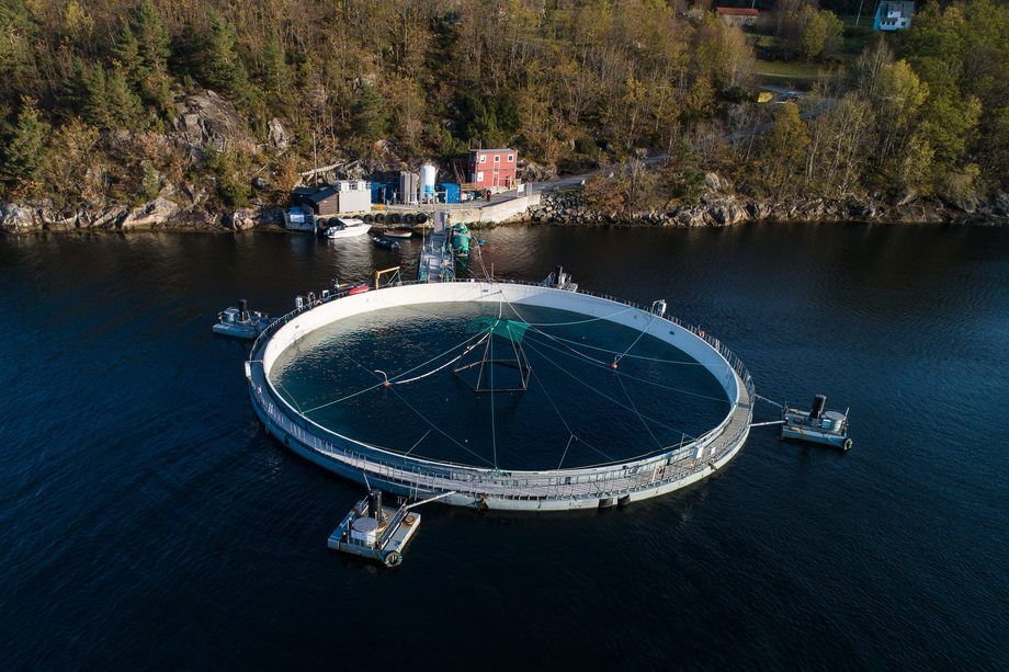 A Neptune cage at a Mowi site in Norway. Photo: Mowi.