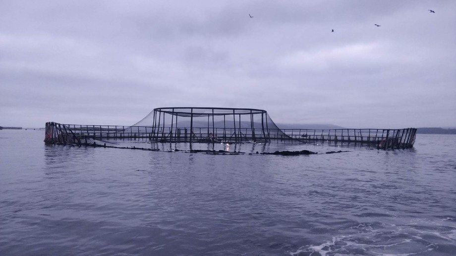 The damage to the pen is clear to see. Photo: Huon Aquaculture.