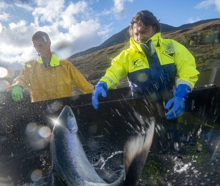 Top chef Shaun Rankin helped harvest fish during his trip to Wester Ross. Photo: SSPO.