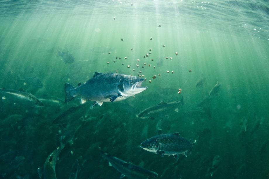 Verdensledende: Cargill og EWOS er ledende innen produksjon av fiskefôr til havbruksnæringen