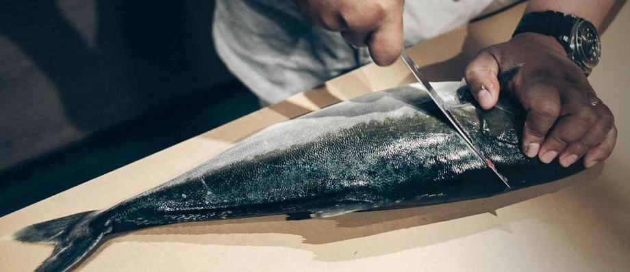 A yellowtail kingfish produced by Sashimi Royal. Photo: Sashimi Royal / Nordic Aquafarms.