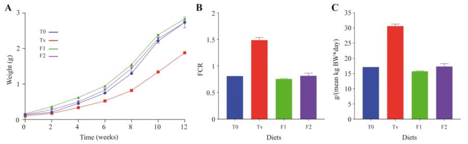 Aumento de peso corporal (A), índice de conversión alimenticia (FCR) (B) e ingesta diaria de alimento (C) en los cuatro grupos experimentales. Fuente: Pérez-Pascual y col. 2021.