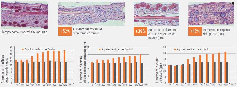 Resultados demestudios realizados por la empresa donde se muestran los cambios en las células secretoras de mucus y del epitelio en peces vacunados y no vacunados. Fuente: Tecnovax.