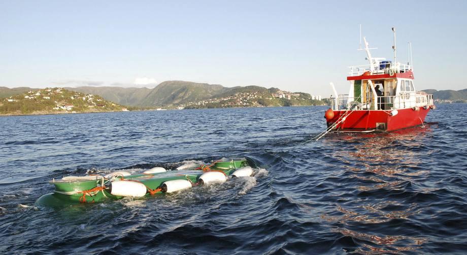 Mykje arbeid har vert lagt ned for å betre Vosso-stammen, til dømes sleping av smolt ut i havet. Men dei gode resultata er det verre med. Foto: Vossolauget.
