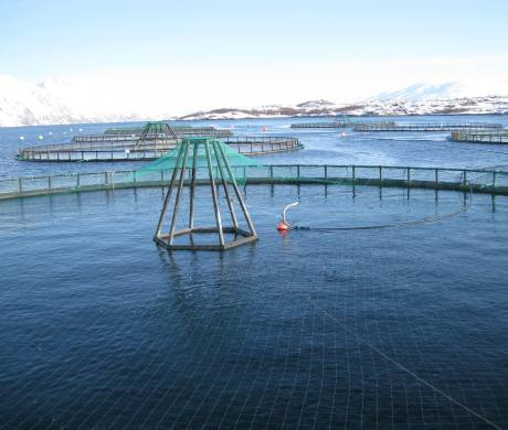 Higher fish farm costs impacted on earnings for Lerøy Seafood Group.