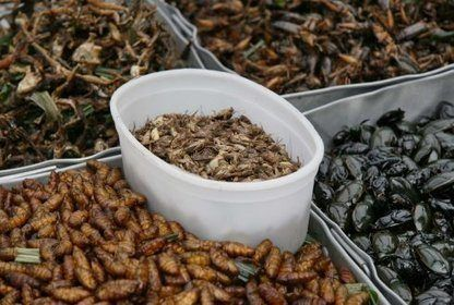 Akrivfoto av insekter.