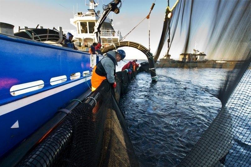 Illustrasjonsfoto av brønnbåt. Båten på bildet har ingen direkte tilknytning til saken. Foto: SinkabergHansen.