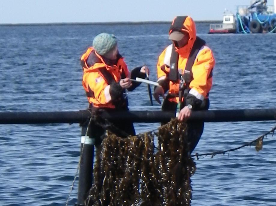 tang, tare, integrert havbruk