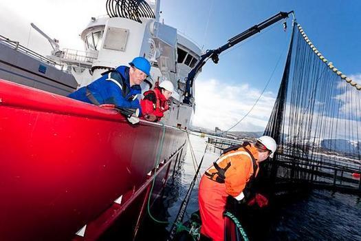 Nordlaks, merd, båt, kran, not, håndtering, arbeid,