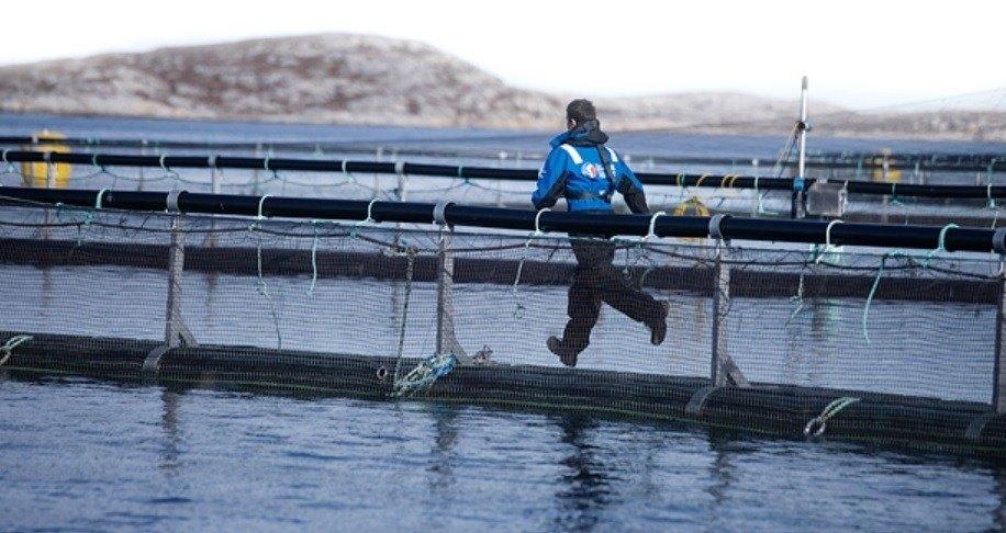 Det var på Frøya det onsdag ble rapportert om rift i not. Illustrasjonsfoto: Salmar