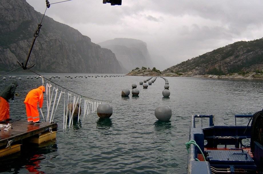 Illustrasjonsfoto av blåskjelldyrking. Bildet er imidlertid fra Lysefjorden i Rogaland.