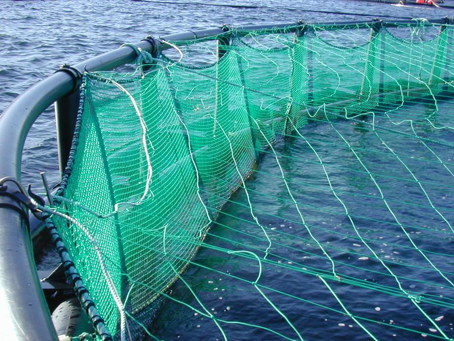 Fisken som rømte har ei snittvekt på i underkant av 4 kg. Illustrasjonsfoto.