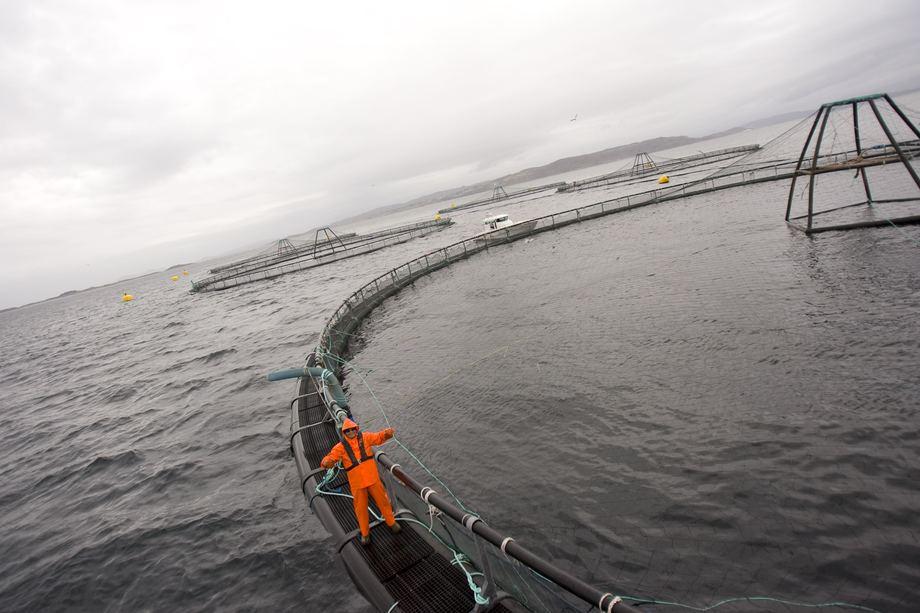 Grieg Seafood Finnmark har akseptert et inndragningsforelegg fra Finnmark politidistrikt på 2,5 millioner kroner.Foto: Grieg Seafood Finnmark