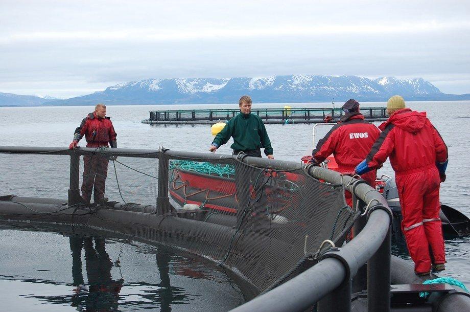 Bilde fra merdkanten hos Kleiva Fiskefarm. Foto: Arkiv.