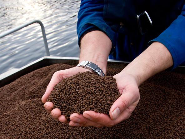 Imagen referencial de alimentos de Biomar. Foto: Archivo Salmonexpert.