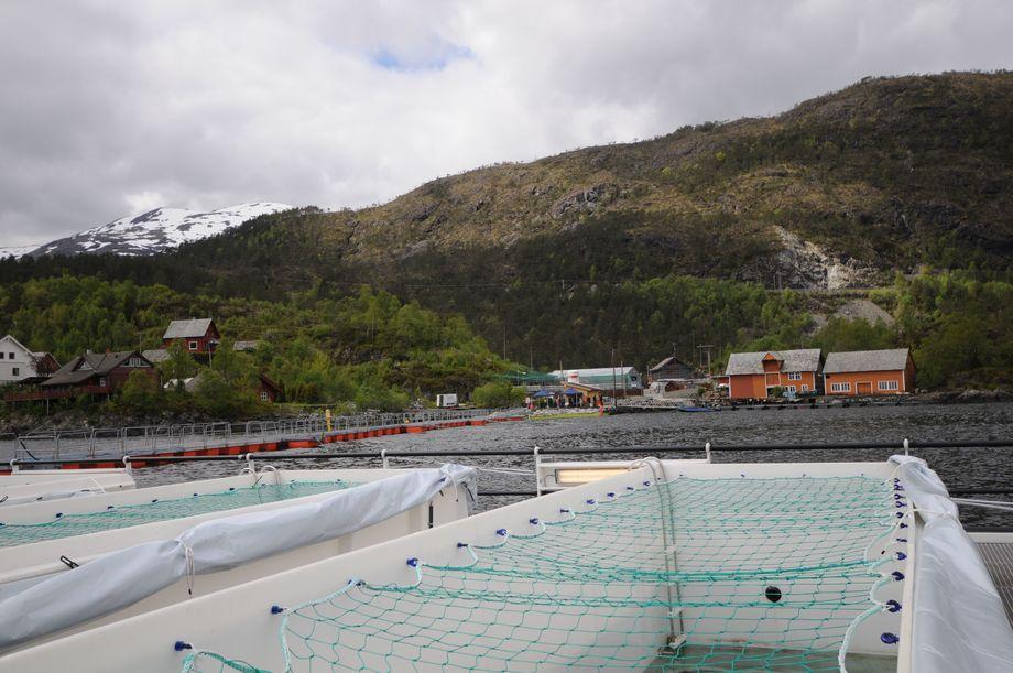 Preline anlegget til Lerøy i Sagen har så langt produsert syv batcher med fisk. Foto: Pål Mugaas Jensen/Kyst.no.