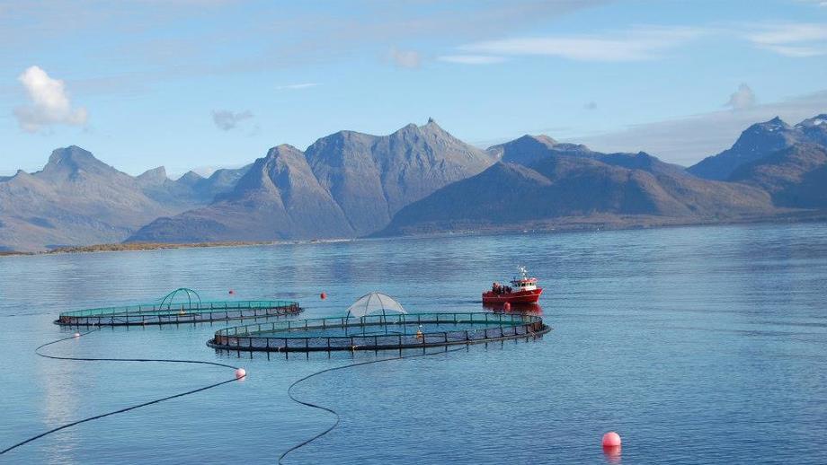 Arkivfoto fra Cermaq i Hammerfest. Foto: Cermaq.