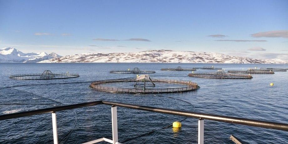 Lusesituasjonen er jevnt over godt, forteller lusekoordinator for Midt-Norge, Lene-Catrin Ervik. Illustrasjonsfoto av merd: Sjømat Norge.